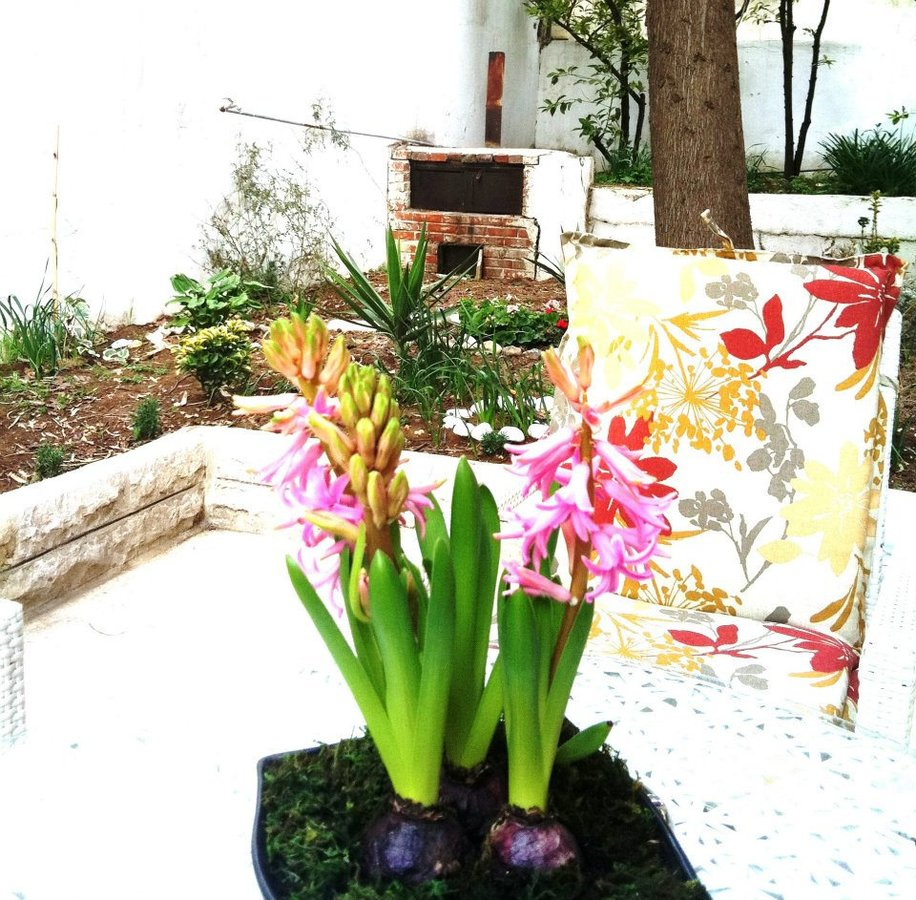 Marvelous Dental Garden Clinics  Dentist In Amman  Whatcliniccom With Hot  Clinic Image   With Adorable Garden Row Covers Also The Range Garden Centre In Addition Homes For Sale In Winter Garden Florida And Cheap Garden Netting As Well As  In  Garden Tool Additionally Gardening Knee Cushion From Whatcliniccom With   Hot Dental Garden Clinics  Dentist In Amman  Whatcliniccom With Adorable  Clinic Image   And Marvelous Garden Row Covers Also The Range Garden Centre In Addition Homes For Sale In Winter Garden Florida From Whatcliniccom